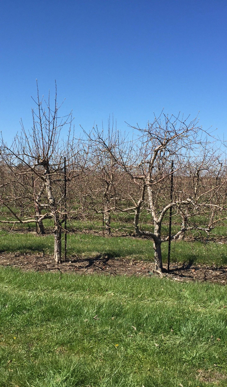 Apple-Orchard-Pataskala_112729