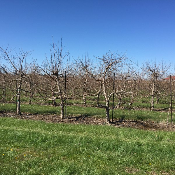 Apple-Orchard-Pataskala_112729