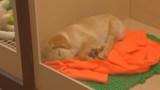 Petland puppy_121276