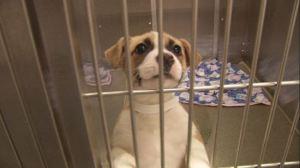 puppy1_129138