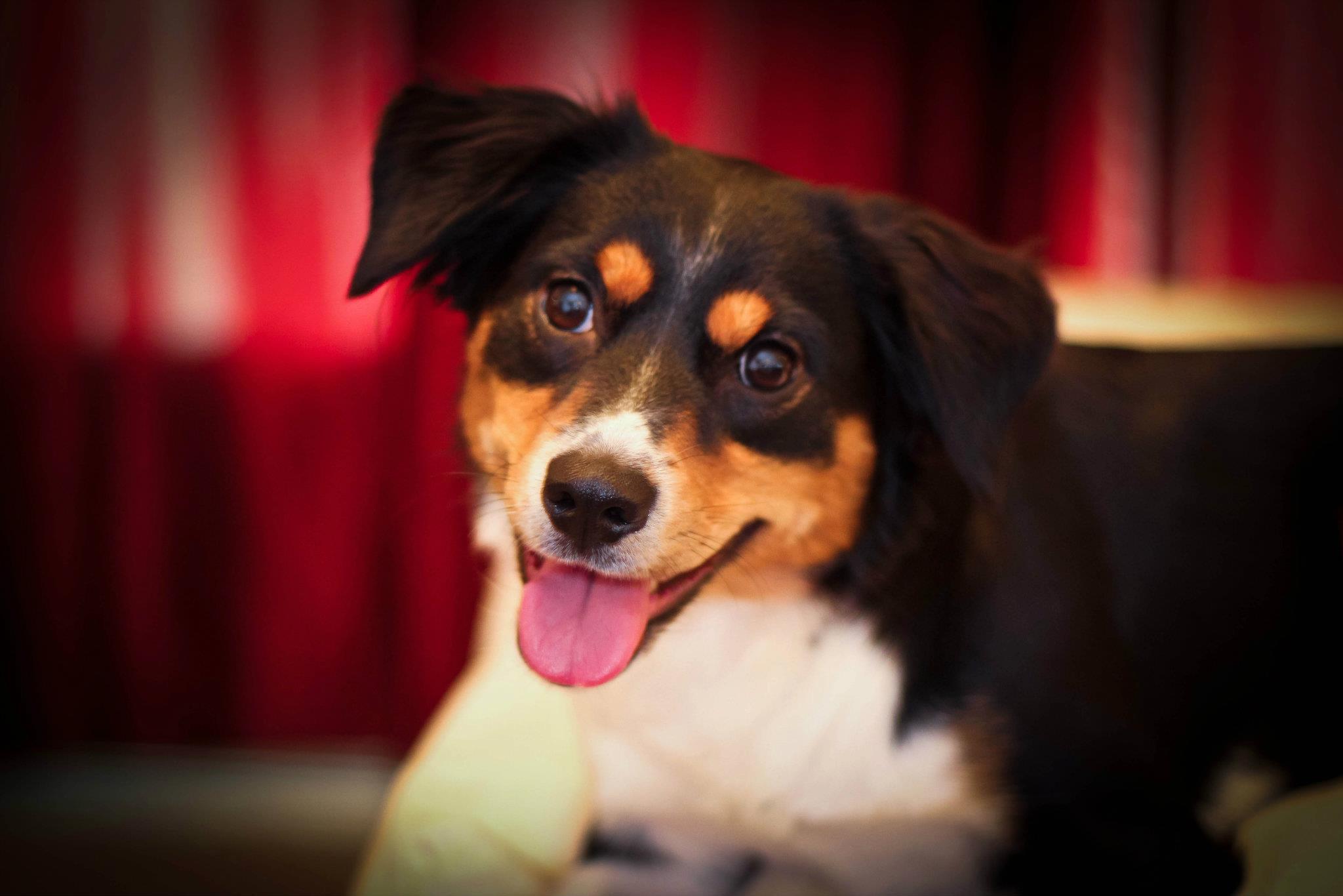 Dog names 2015_68033