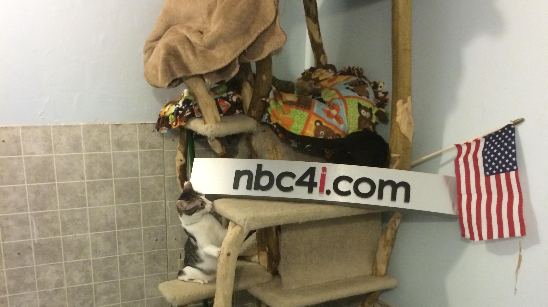 nbc4-cats_233877
