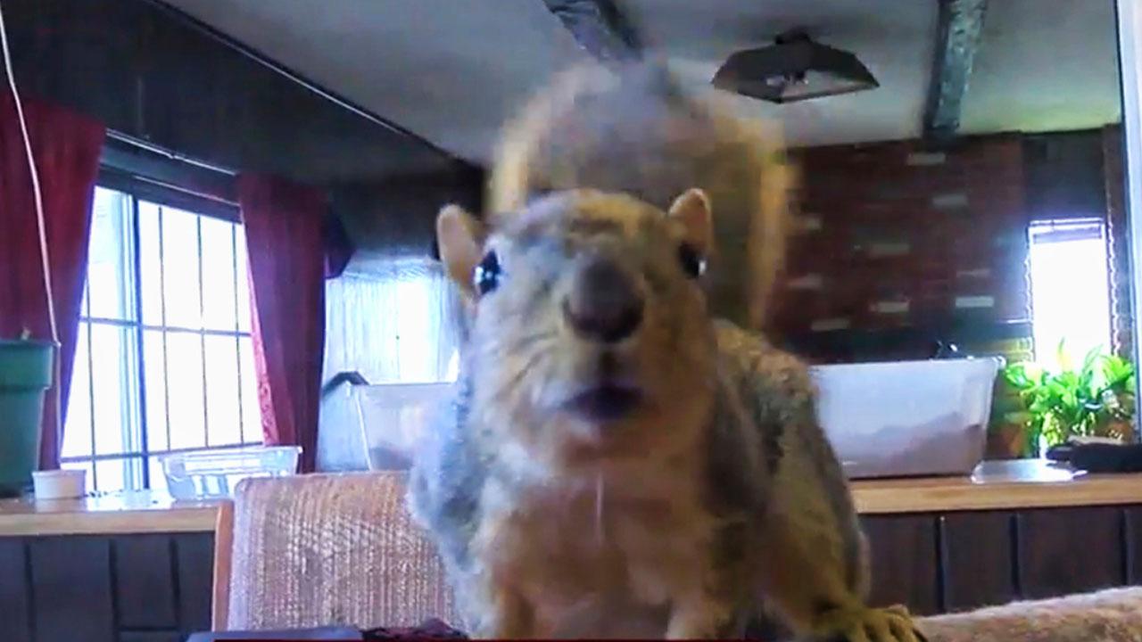 attack-squirrel_253627