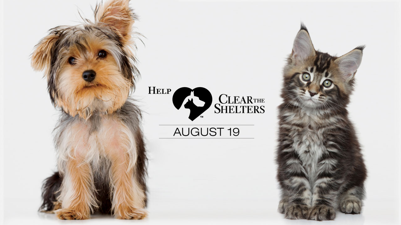 clear-the-shelters-image_340929