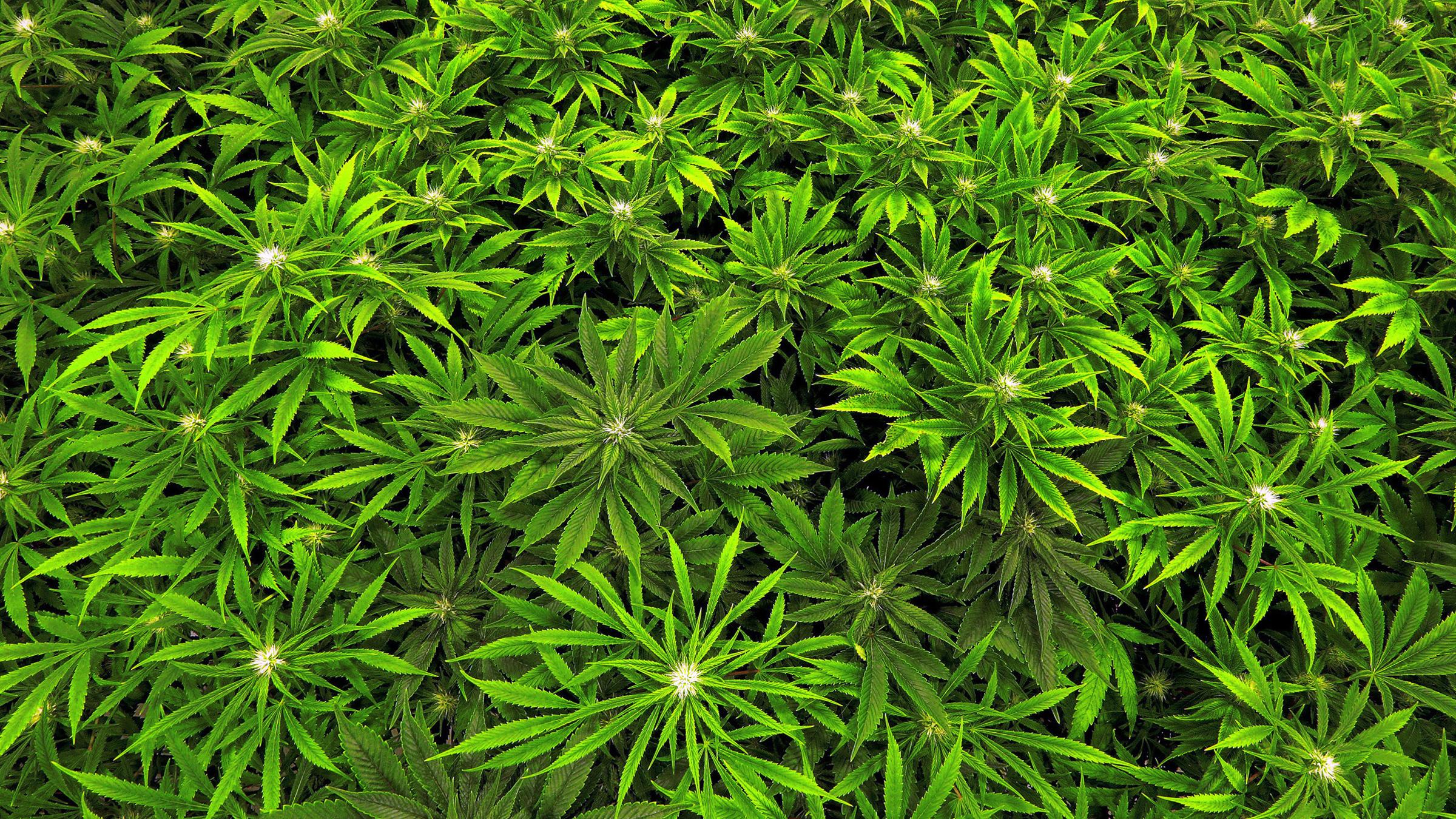 Marijuana Health Effects_230546