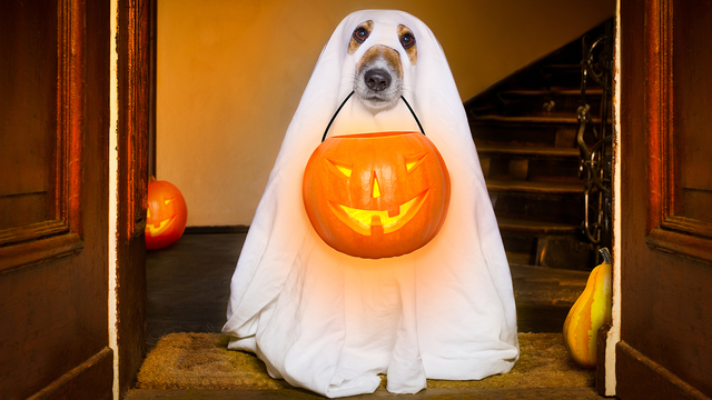 Halloween Ghost Dog Trick Or Treat_361096