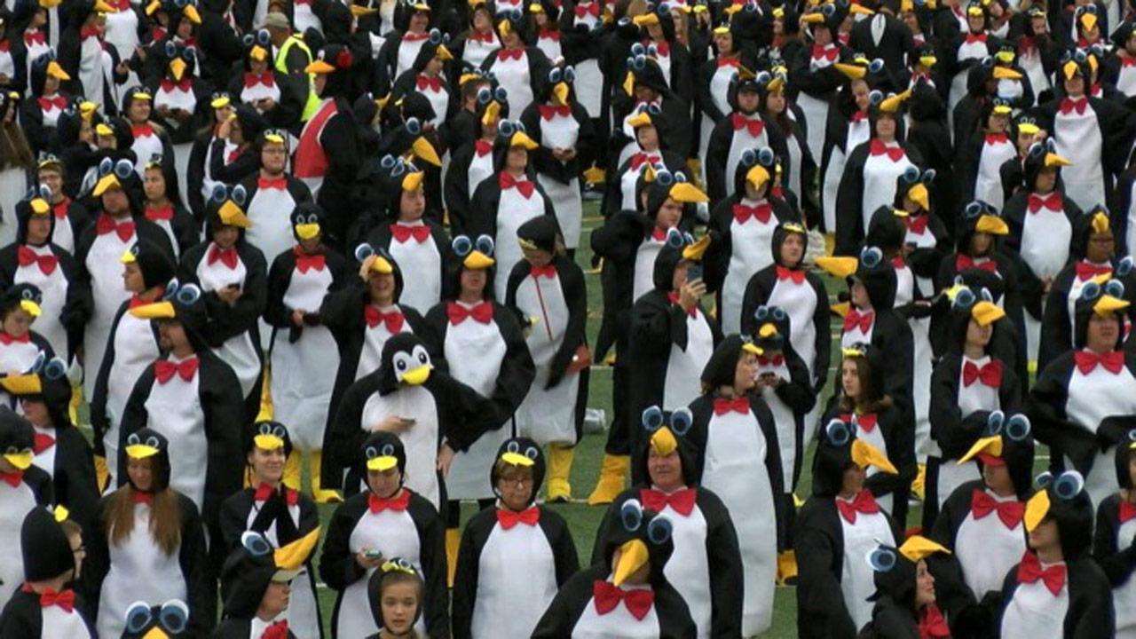 penguin-record_361711