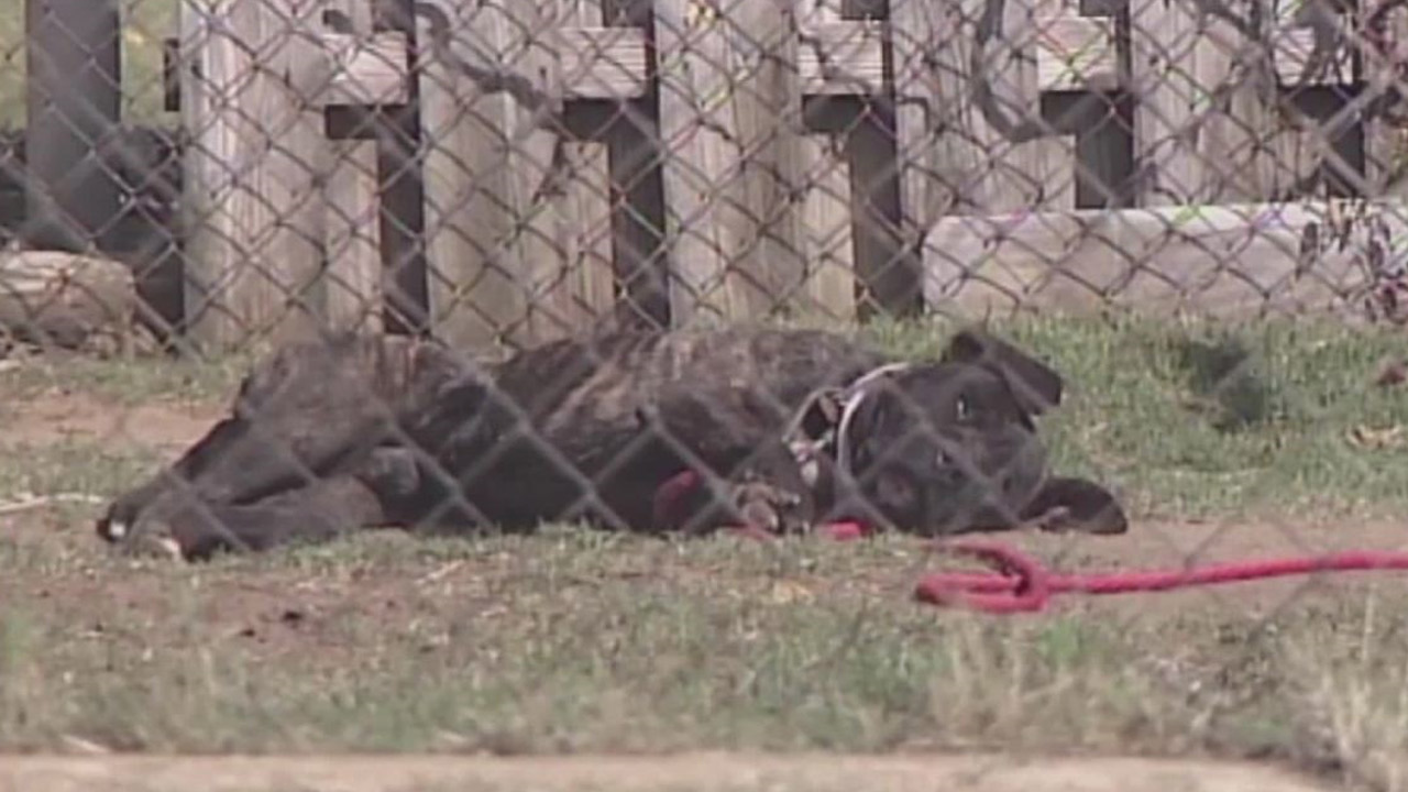 New city ordinance places tight restrictions on tethering dogs