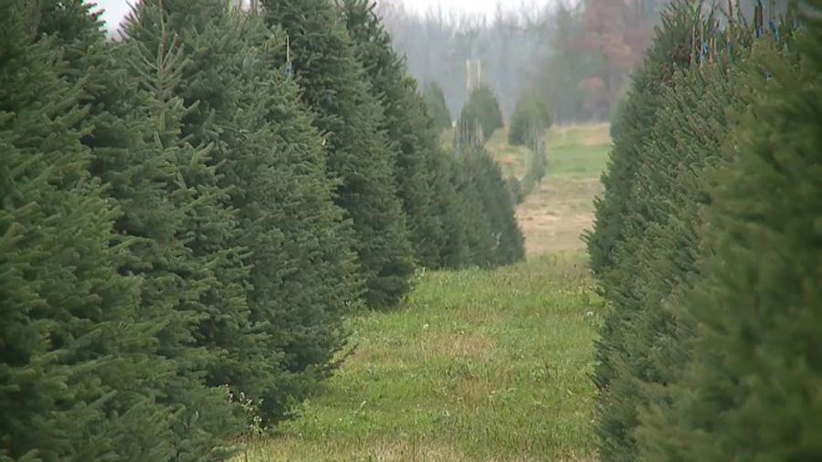 tree-farm-business_212128