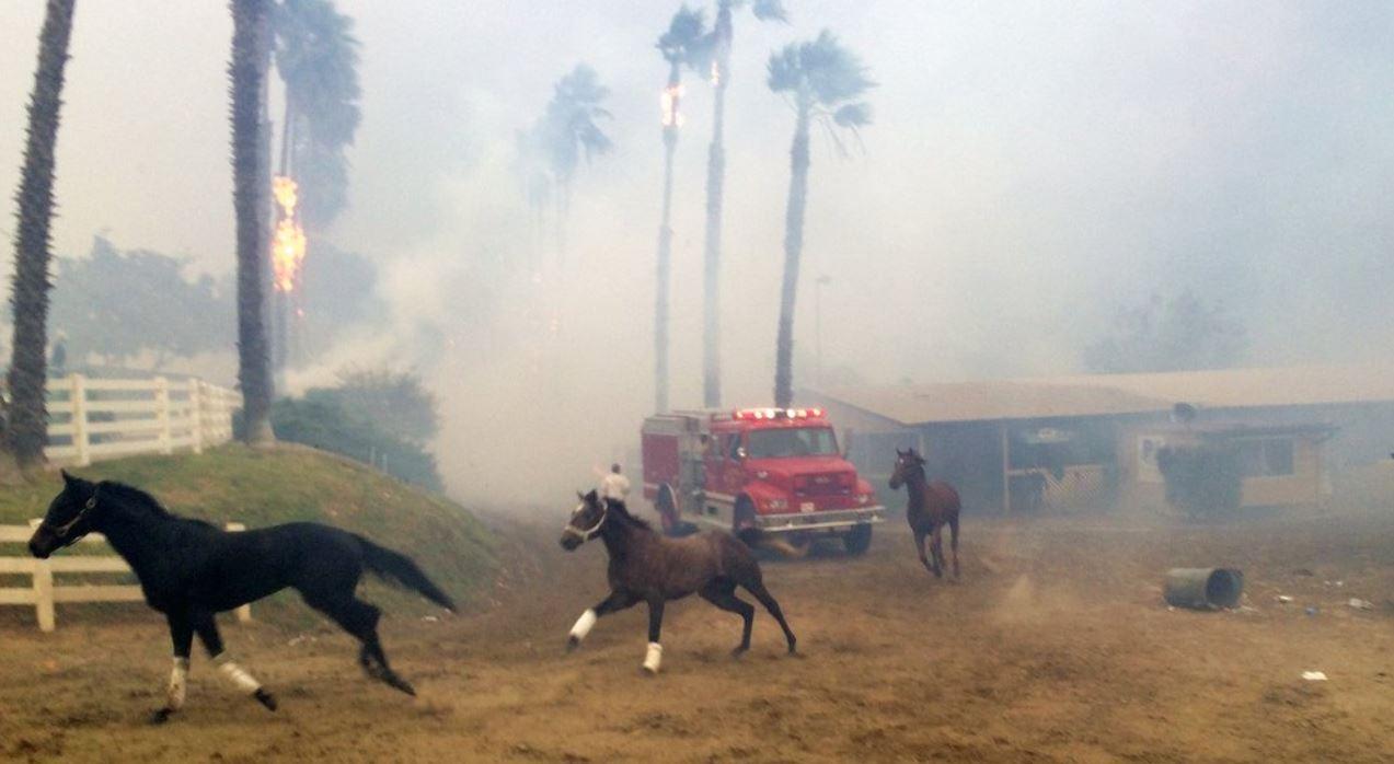 race horses fire_370608