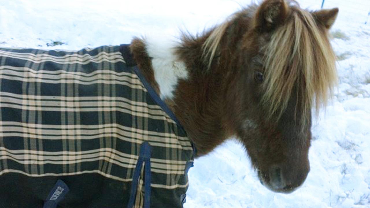 Pony Fundraiser_381039