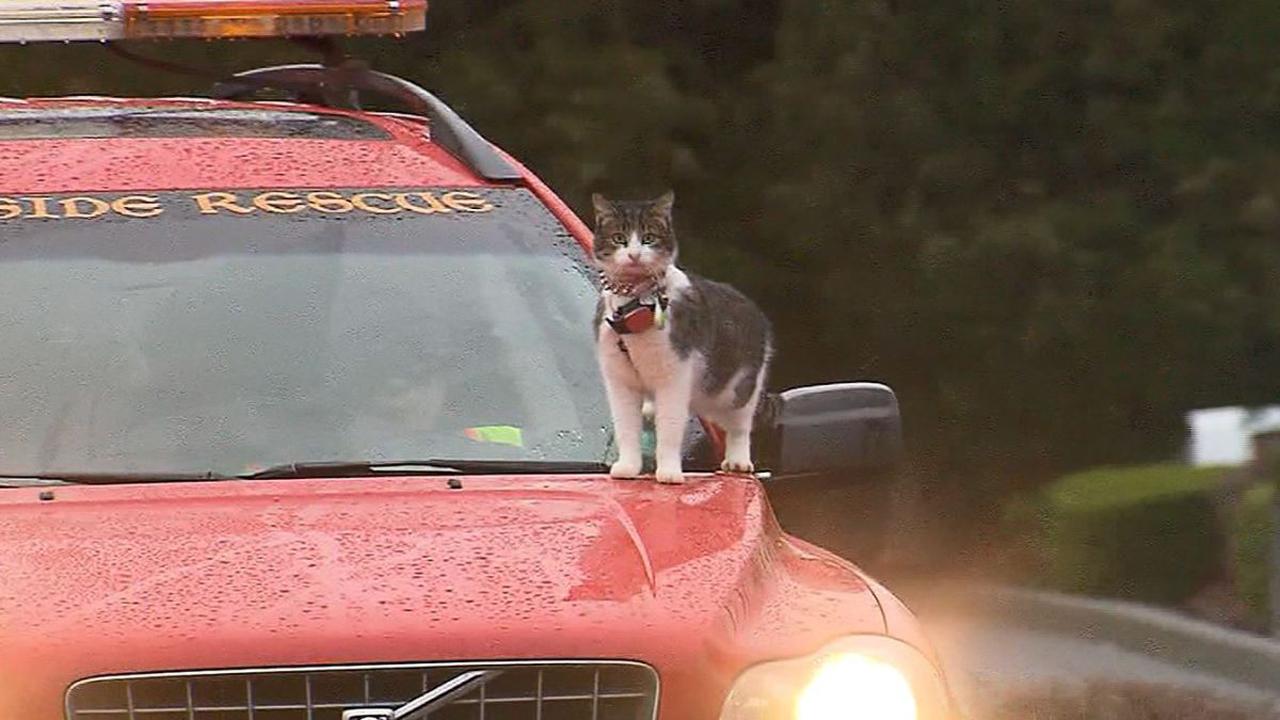 cat-on-car-hood_384011