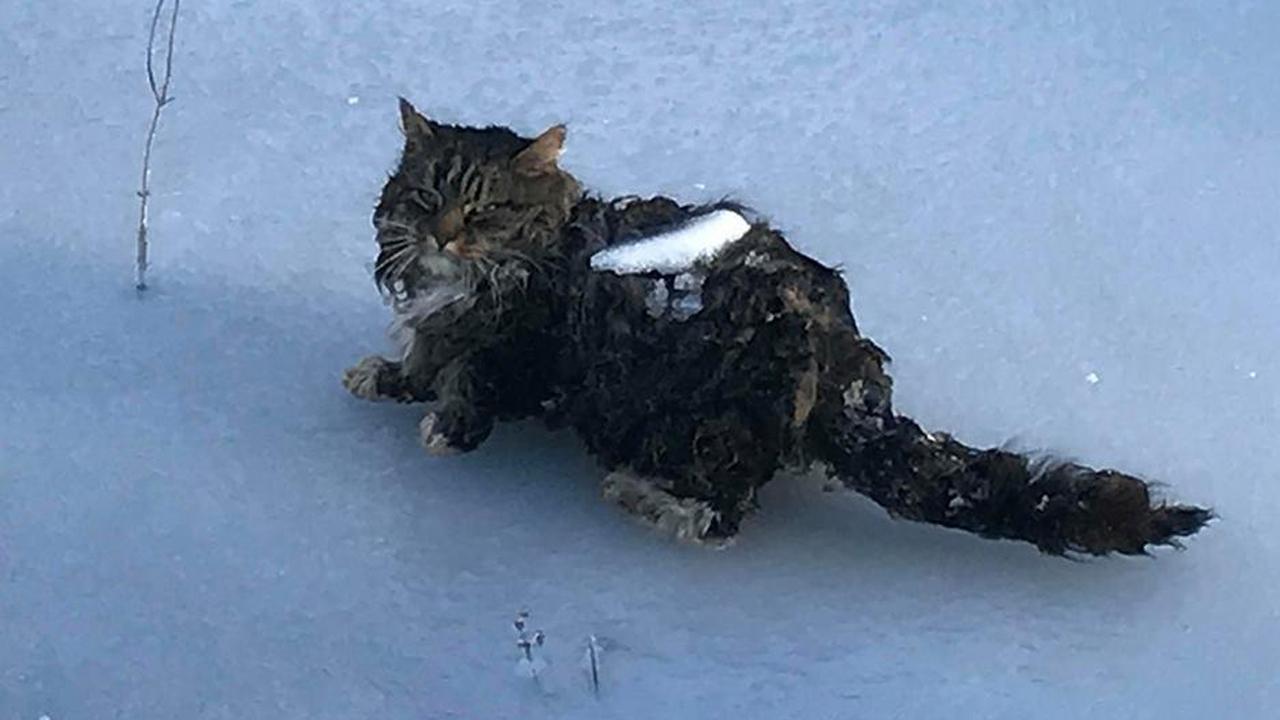 cat-rescue_383899