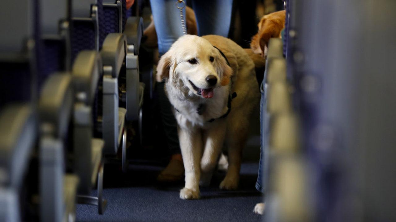 Animals on Planes_381580