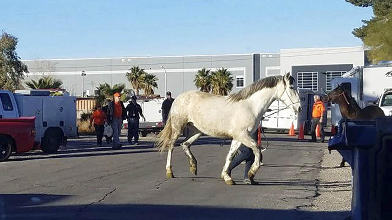 horse_382442