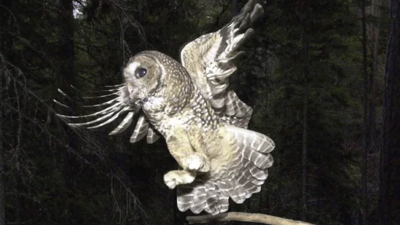 owl_379271