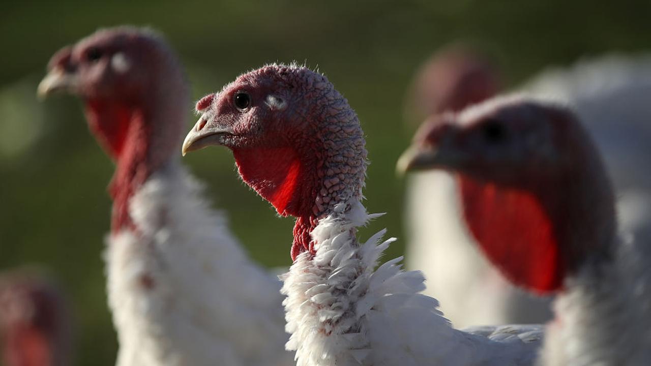 turkey_377578