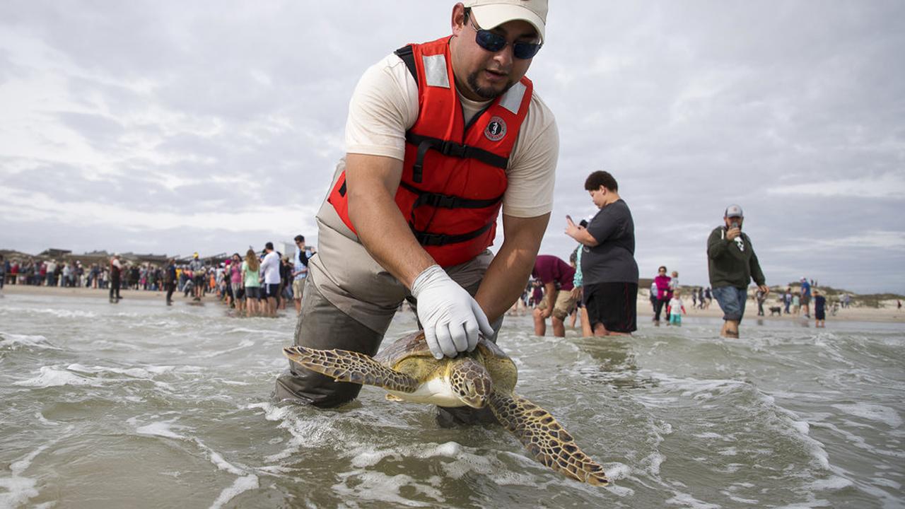 Turtle Release_377594