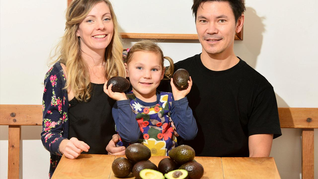 013118-avocados1280x720-recovered_385078