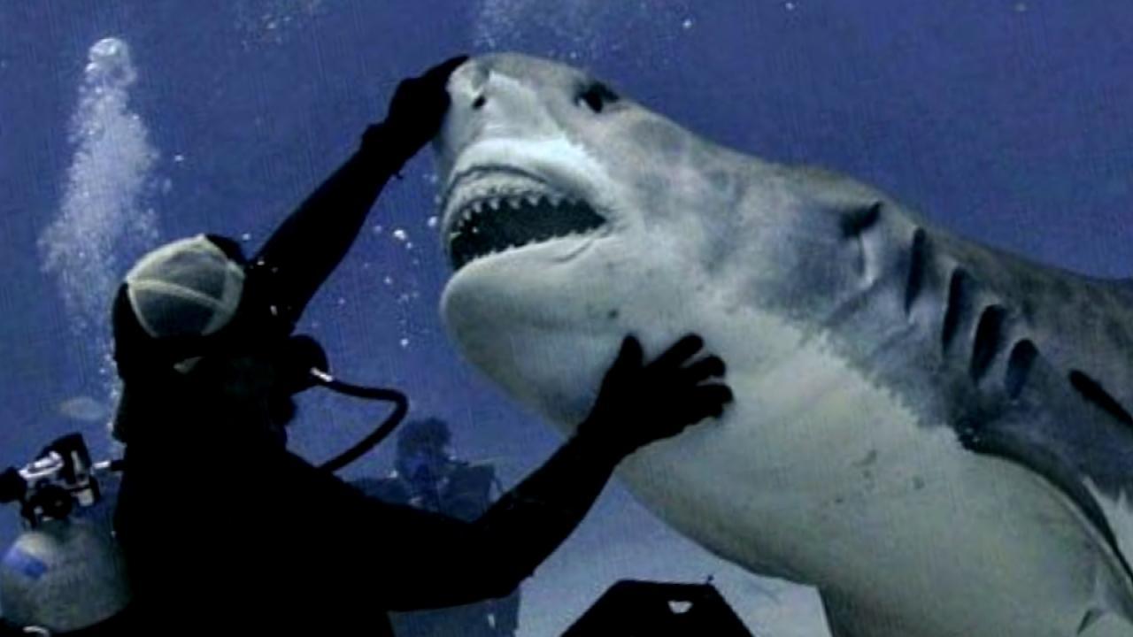 021318_shark_diver_web_391670