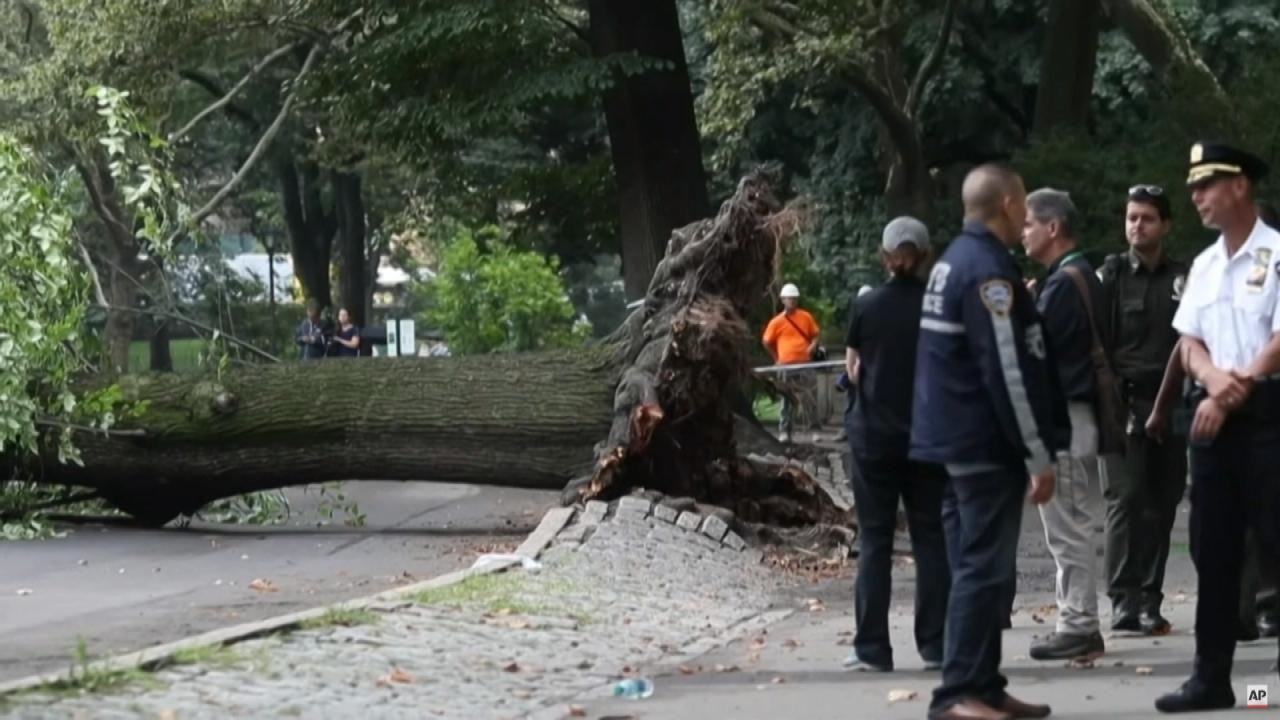 022618_tree_fall_web_397355