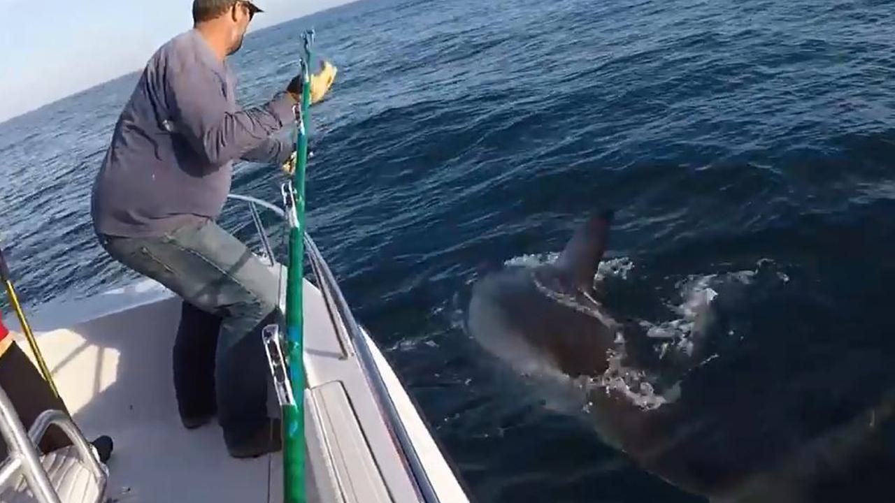 022818-shark-1280x720_397754