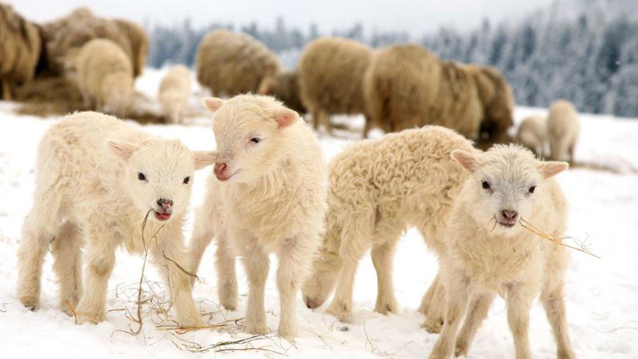 030518-lamb-oven-1280x720_399447