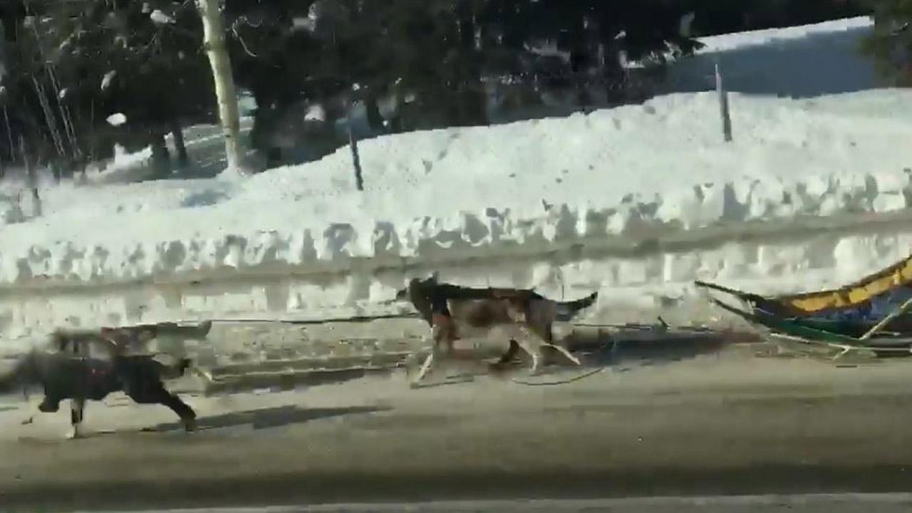 031418-musherless-dogs-1280x720_401795