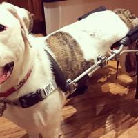 032518_wheelchair_puppy_web_404607