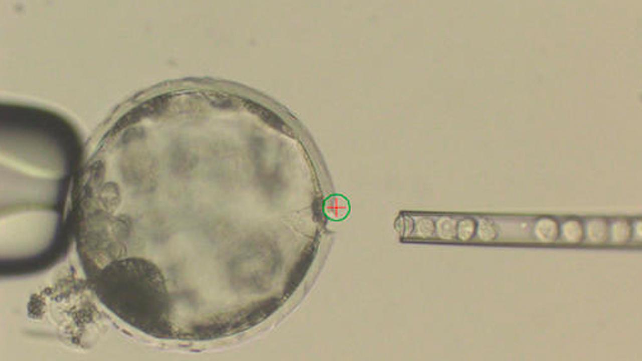 embryoweb_339978
