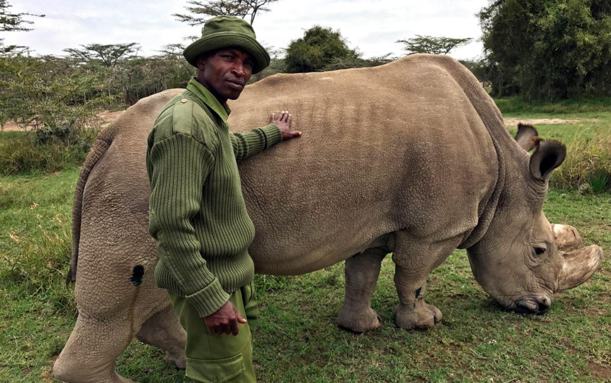 last rhino_398265
