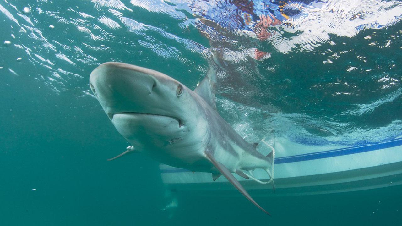 shark-newsdesk_398620
