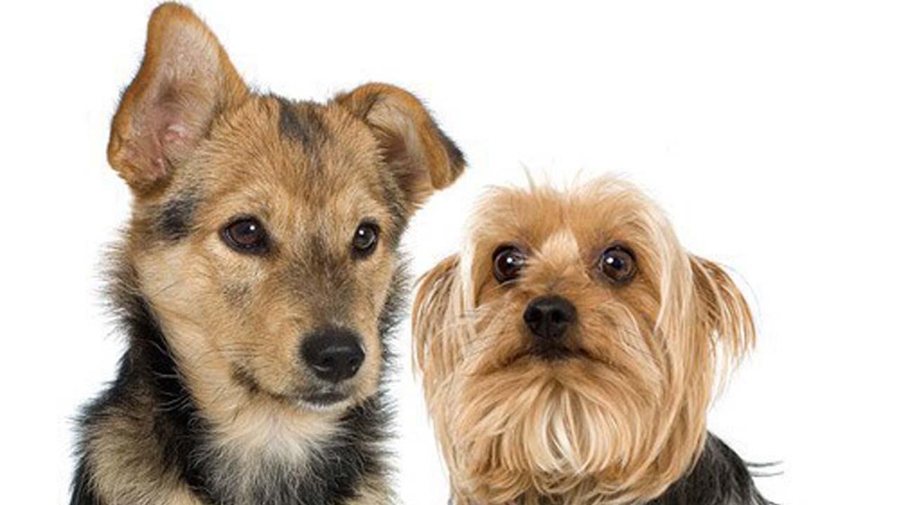 dogspets_175670