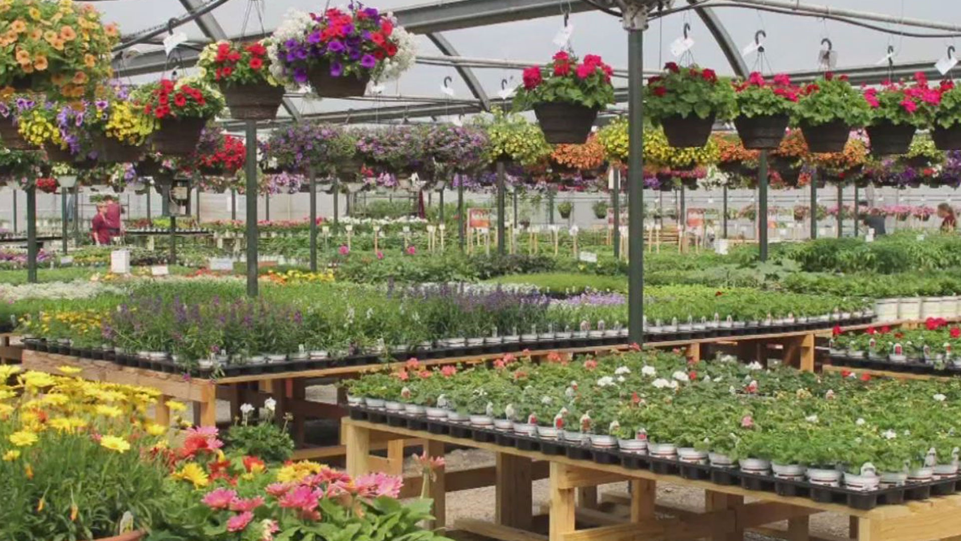Top Spots 5 Of The Best Greenhouses And Garden Centers In Central