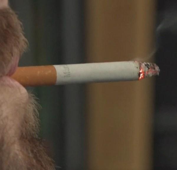 smoker_1522850036894.jpg