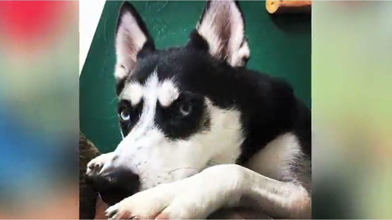 Husky_breaks_into_petting_zoo__kills_doz_0_20180531123043