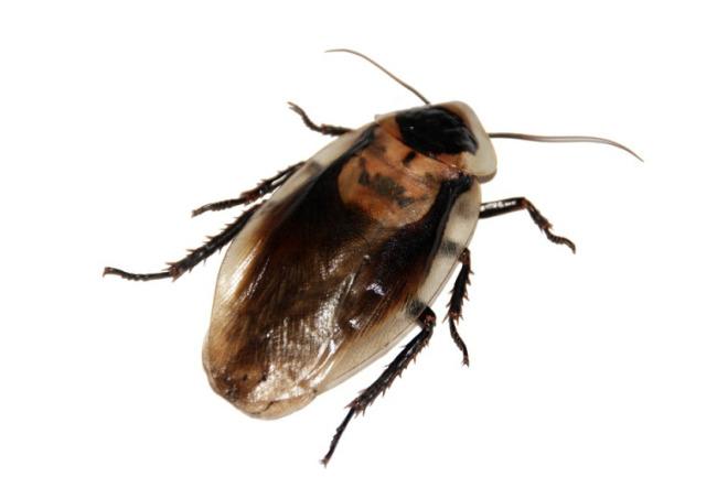 cockroach_ap_235772