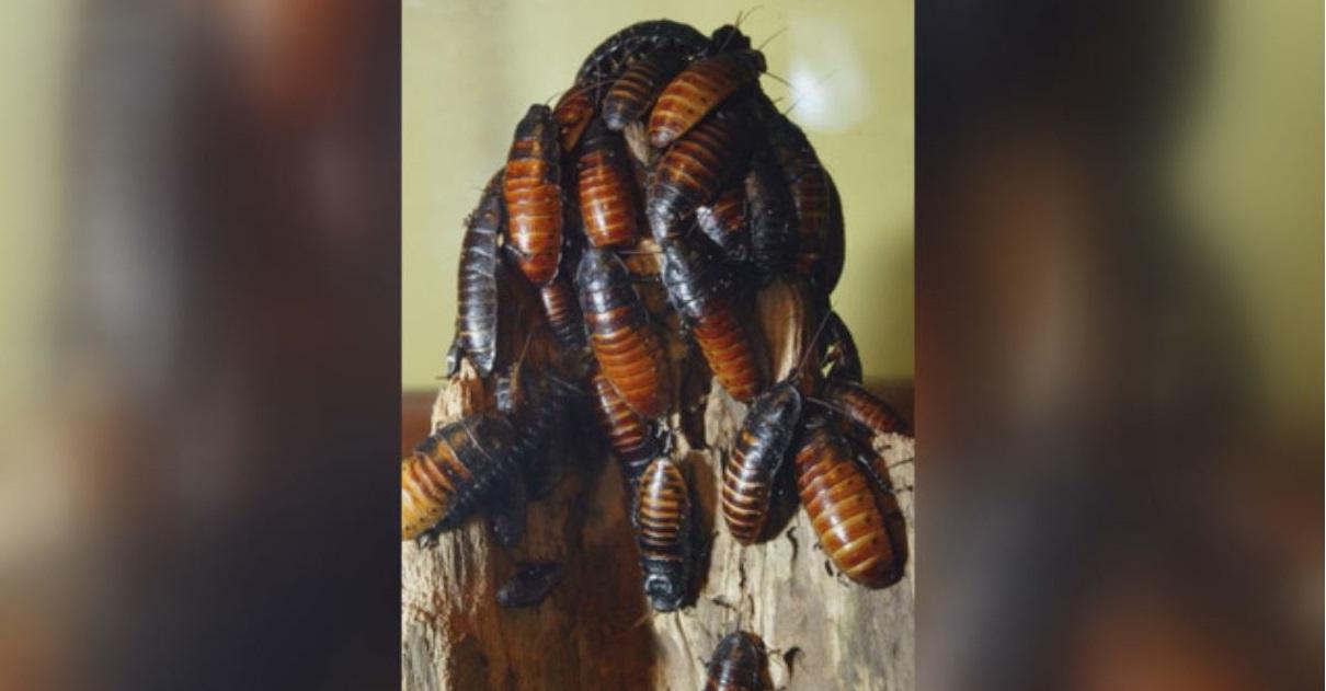 cockroaches_1527461213636-846652698.JPG