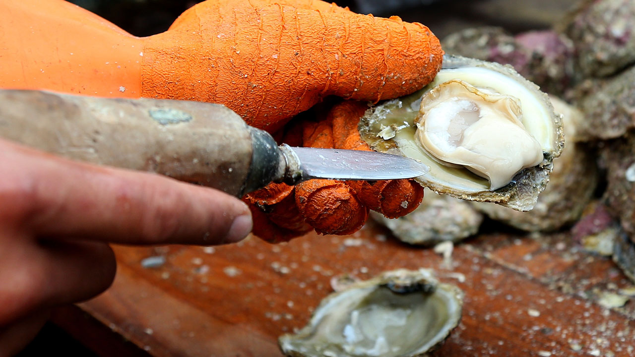 oyster_1525316254177.jpg