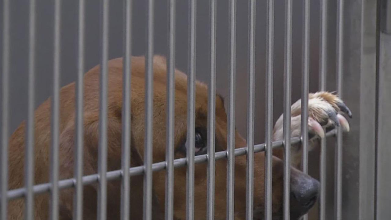 shelter dog lookin sad_1524846980846.JPG.jpg