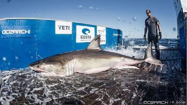 hilton-the-shark_29566010_ver1.0_640_360_1528935332782_45398534_ver1.0_640_360_1528985563620.jpg