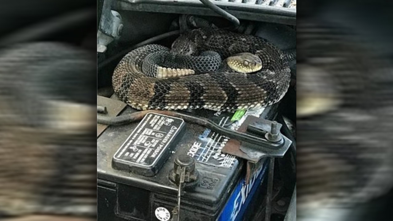 snake-in-engine_1529602972534.jpg