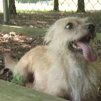 Max's Mission: 3-year-old terrier mix Malcolm up for adoption at Ross Co. Humane Society