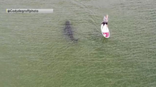 Paddleboarder_shark_close_encounter_1_20180731175121-846652698