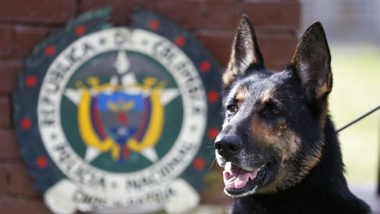 Colombia Threatened Drug Dog_1532709675422