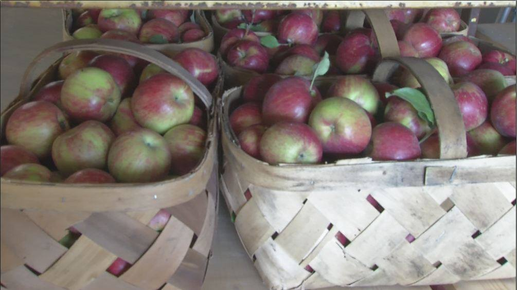 Top Spots 5 Best Places To Go Apple Picking In Central Ohio