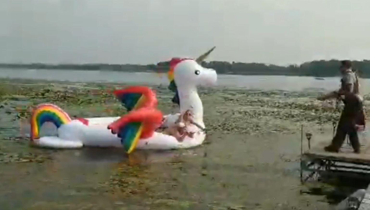 minnesota unicorn rescue_1534112125935.jpg-846652698.jpg