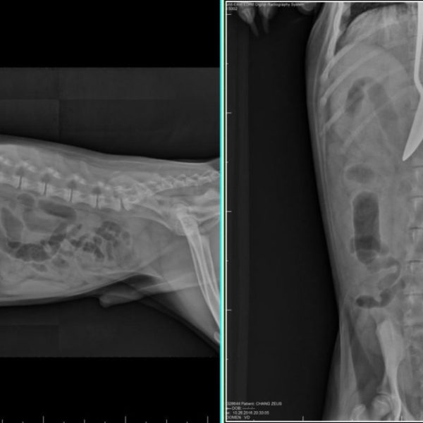 PET X-RAY TWO_1544585739845.jpg-846652698.jpg
