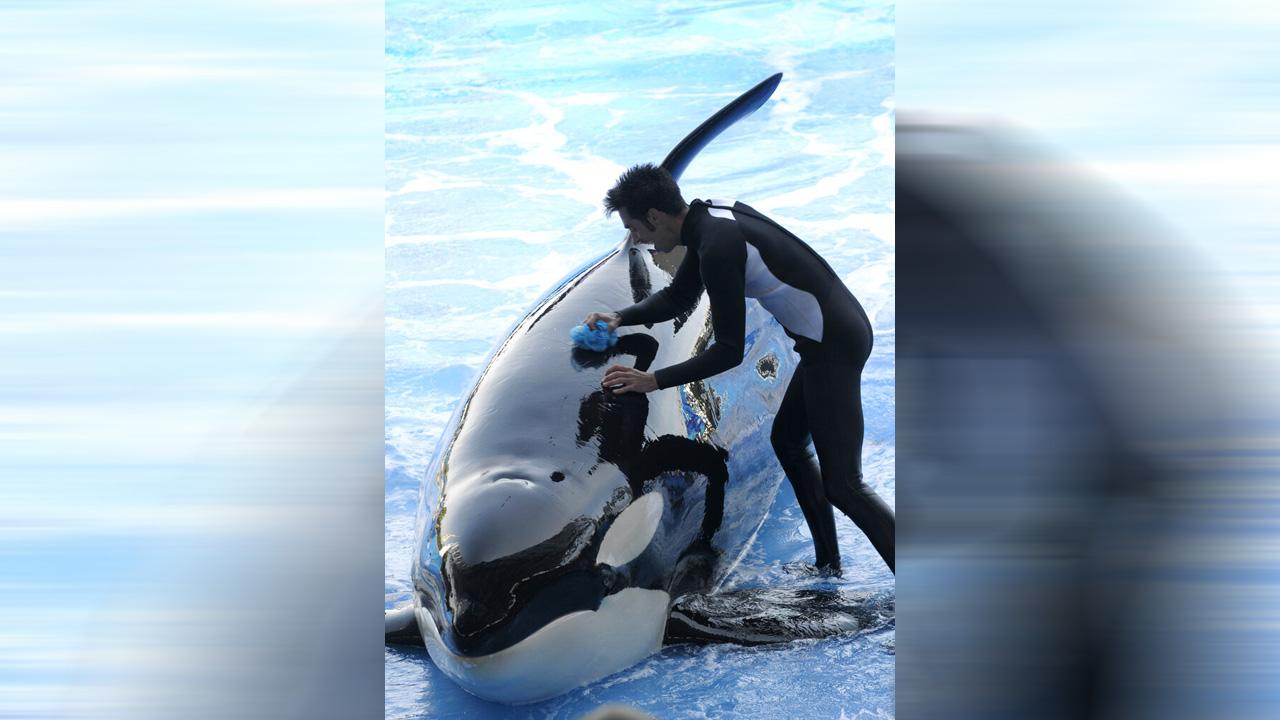 orca_1548713896478.jpg