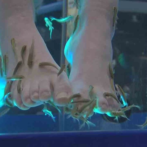 Fish pedicure spas operate without oversight in Ohio; banned in some states